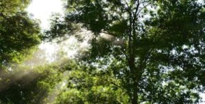 Spiritual Reflections - Light streaming through trees