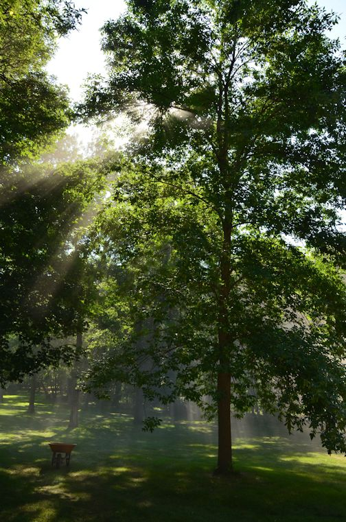 Spiritual Resources - Sunlight coming through trees